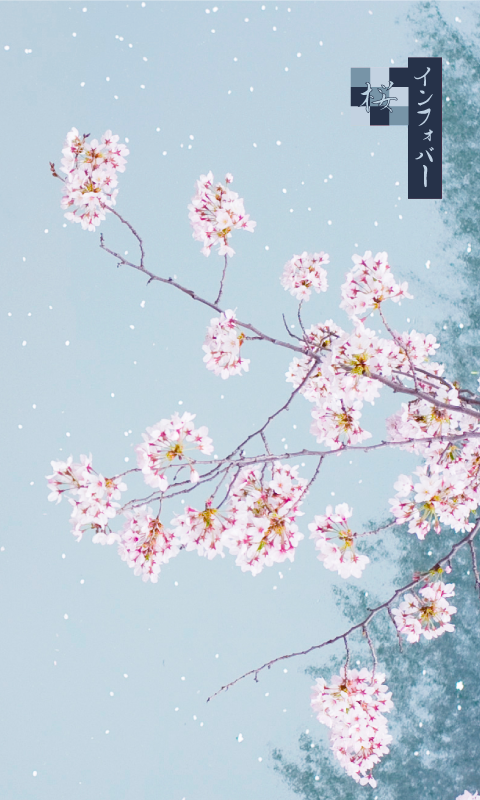 INFOBAR xv用壁紙 | 桜_茄子紺(480x800)
