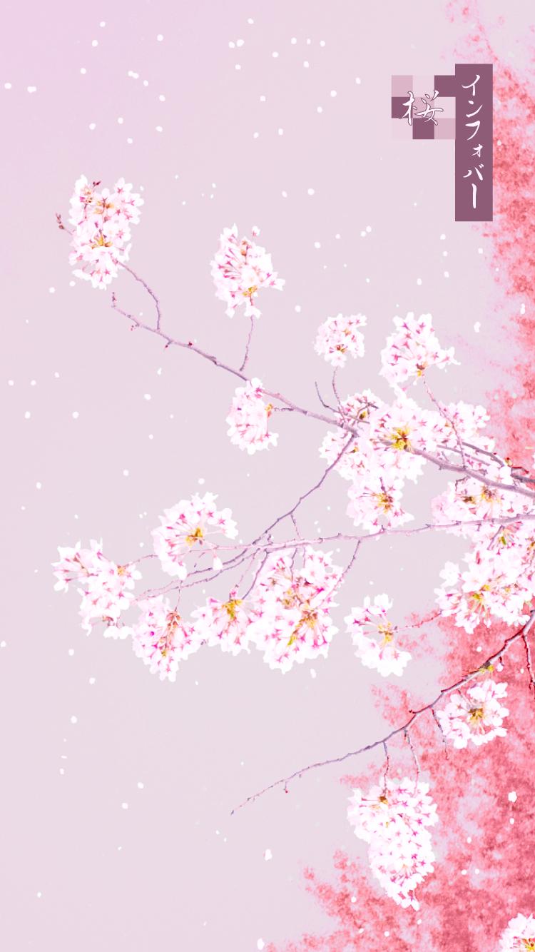 iPhone 6, 6s, 7, 8用壁紙 | 桜_チェリーベリー(750x1334)