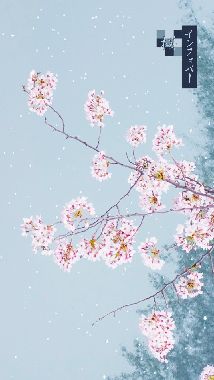 iPhone 6, 6s, 7, 8用壁紙 | 桜_茄子紺(750x1334)
