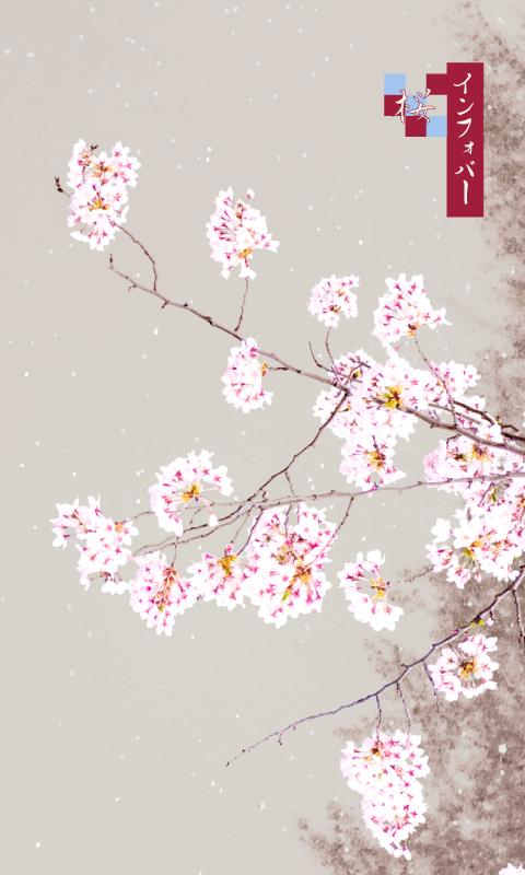 INFOBAR xv用壁紙 | 桜_錦鯉(480x800)
