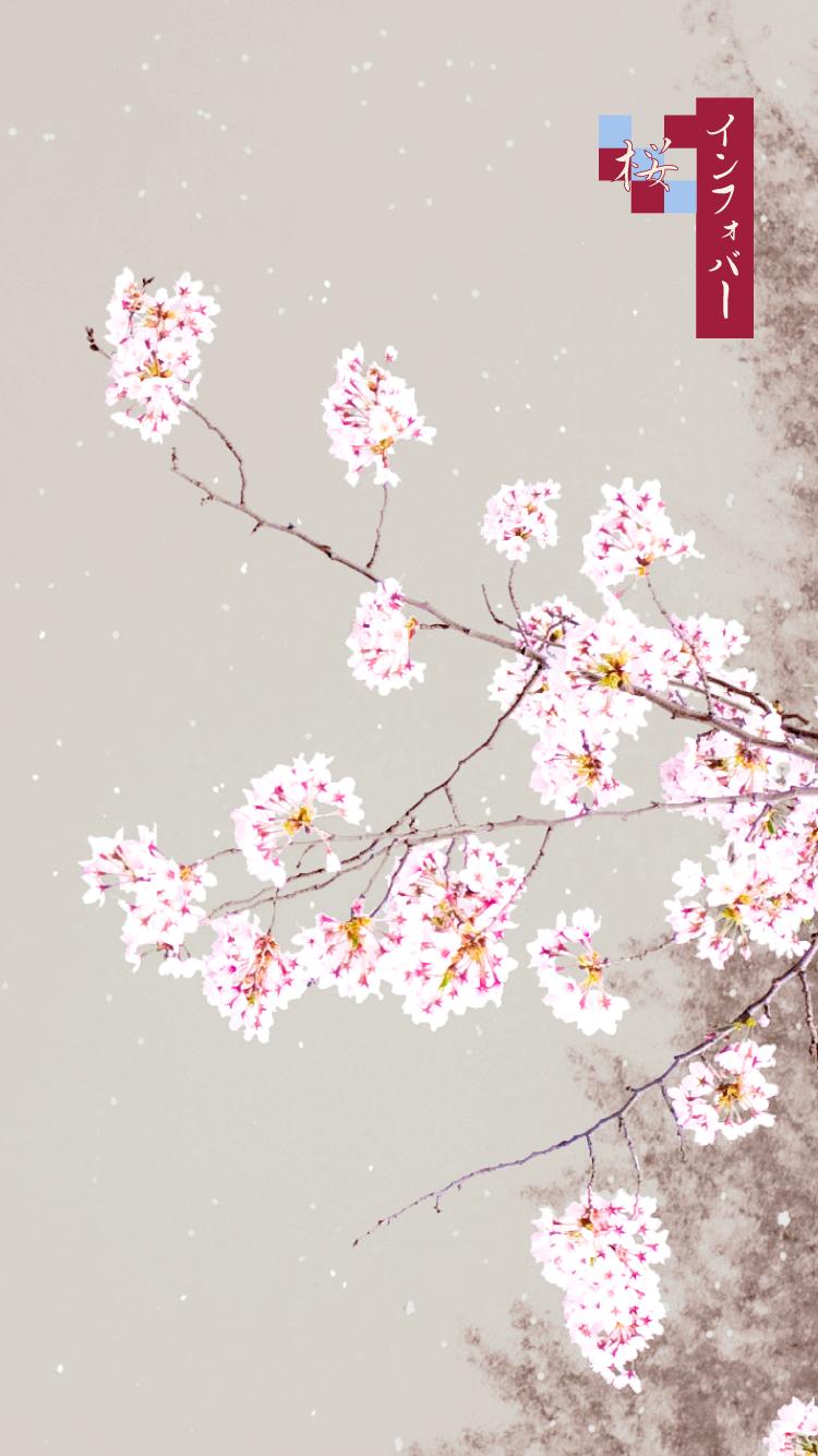 iPhone 6, 6s, 7, 8用壁紙 | 桜_錦鯉(750x1334)