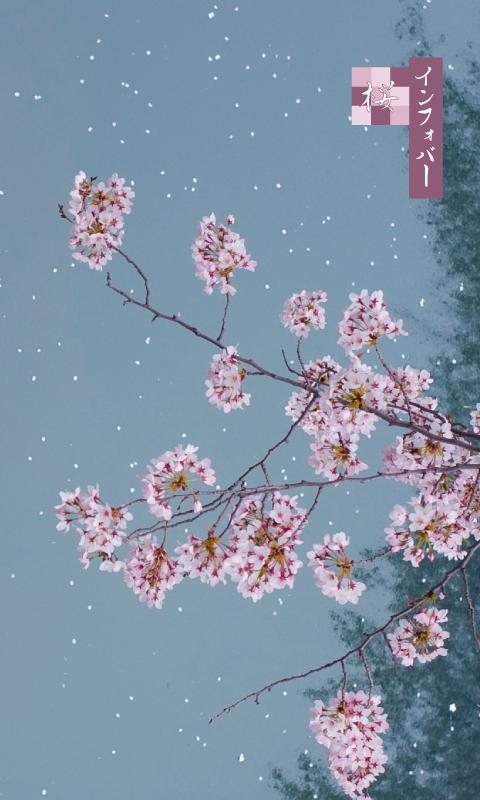INFOBAR xv用壁紙 | 夜桜(480x800)