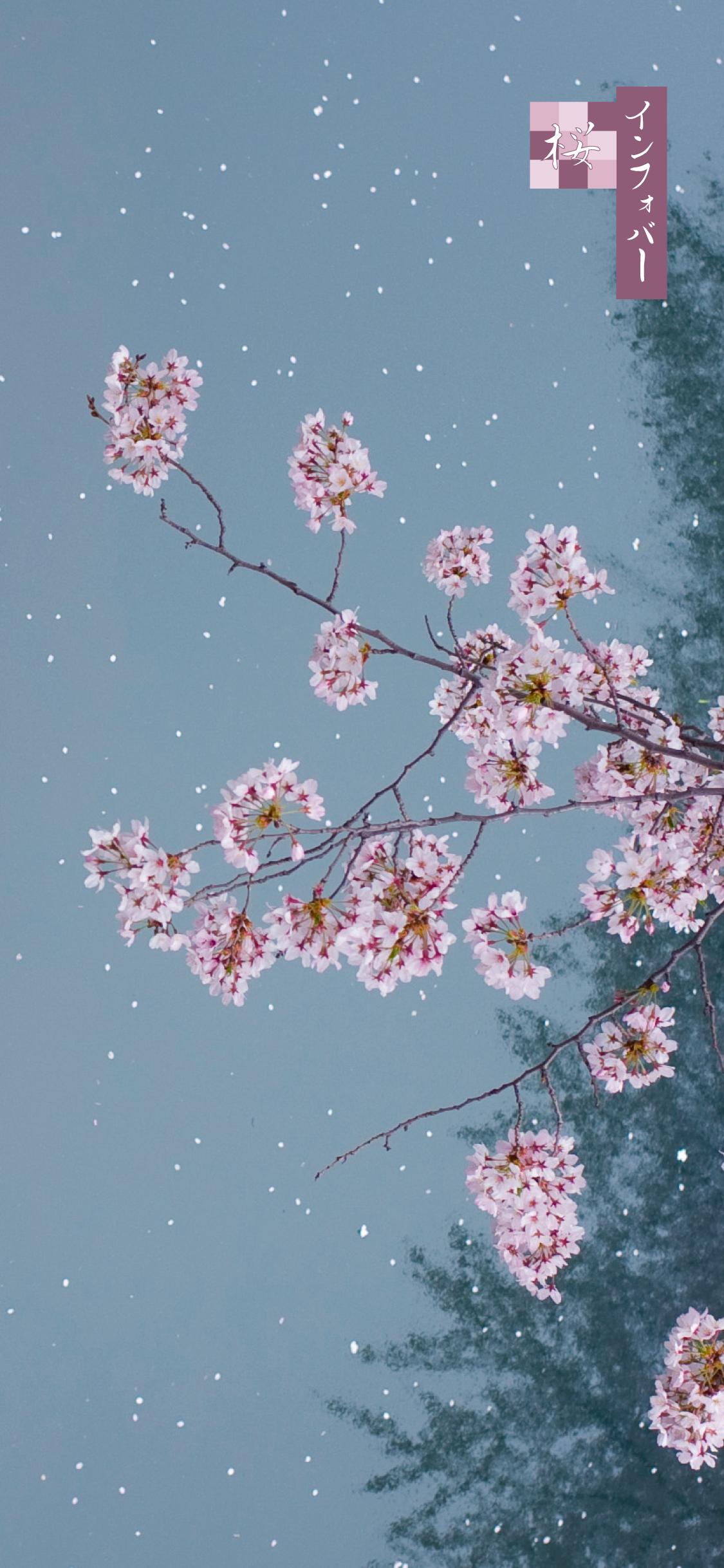 iPhone X, Xs, XR, 11, 11 Pro用壁紙 | 夜桜(1125x2436)