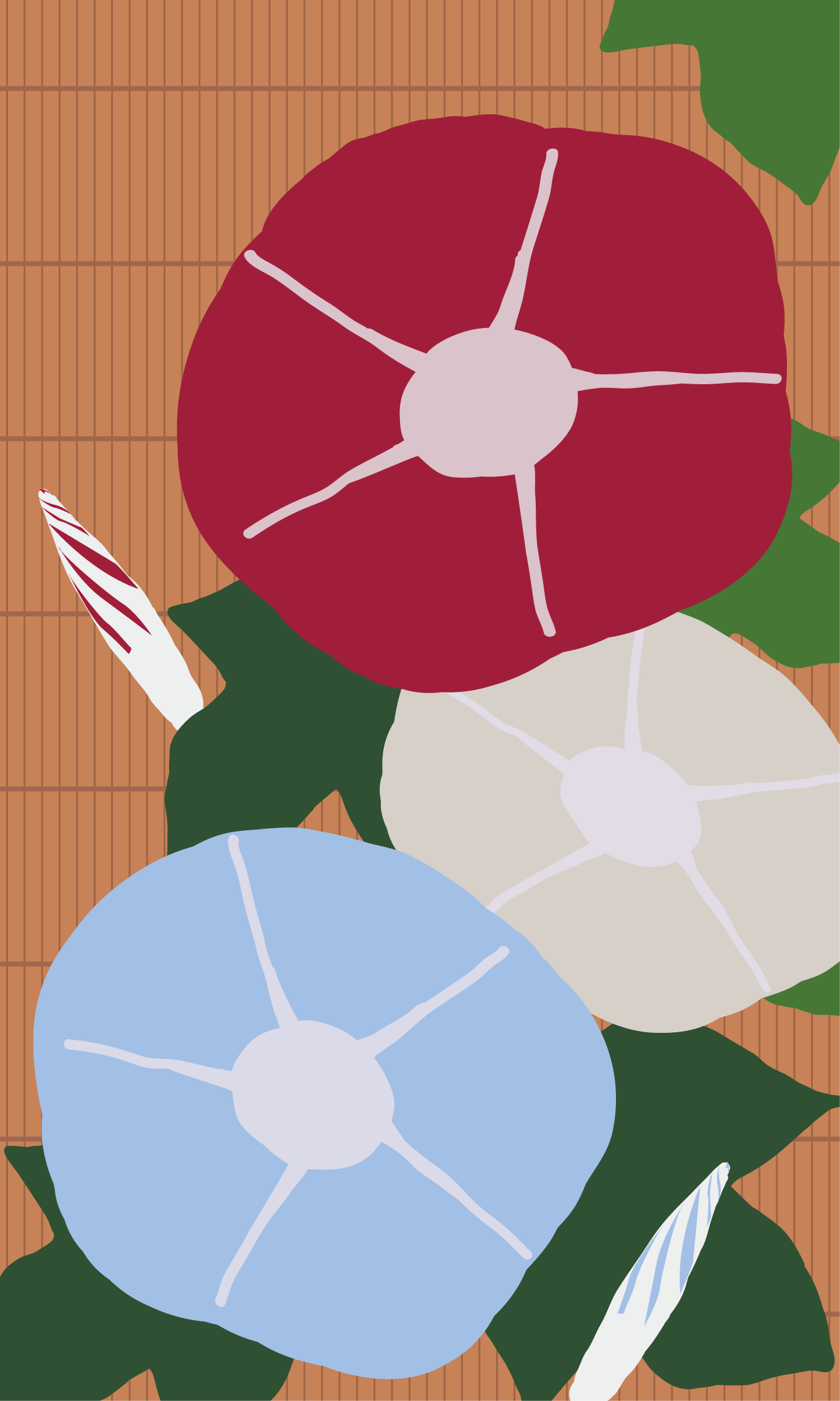 INFOBAR xv用壁紙 | あさがお NISHIKIGOI(480x800)