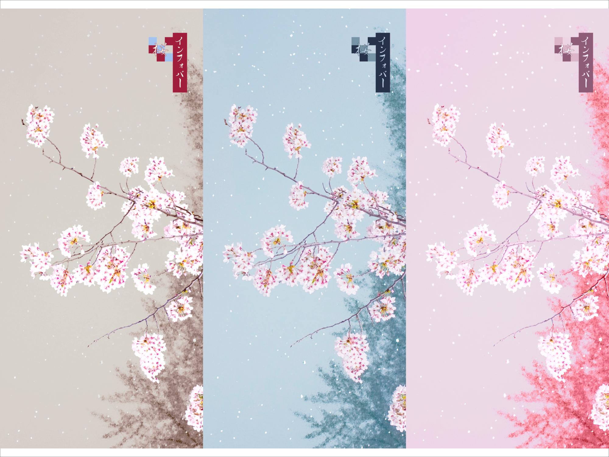 INFOBAR xv用壁紙 | 桜